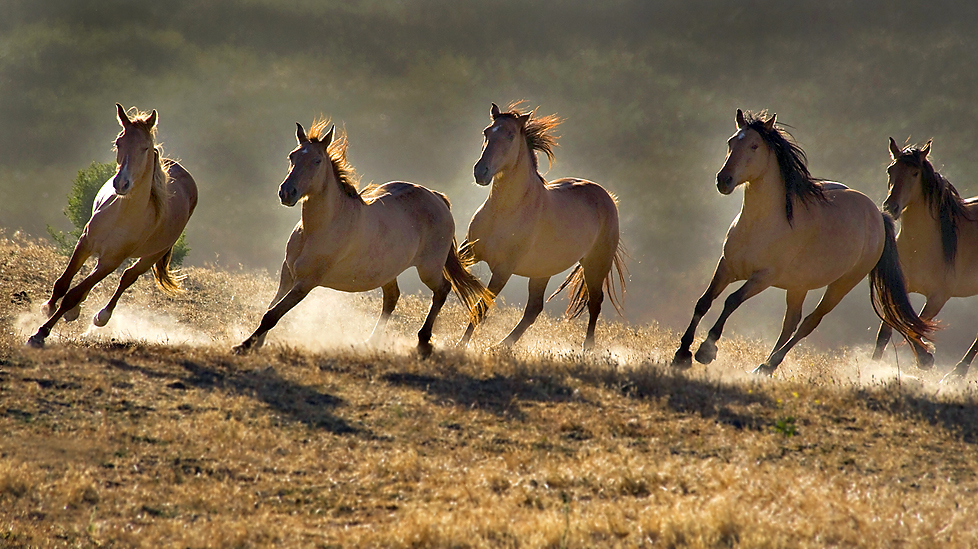 wild horse hd wallpapers - photo #47